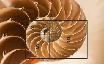 Fibonacci Folge2